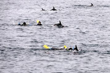 Tourisme responsable: faut-il renoncer ànager avec lesdauphins?