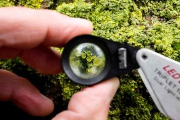 Les lichens, trésor scientifique et sentinelles de l'environnement)
