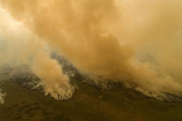 Brésil L'Amazonie et le Pantanal toujours ravagés par les incendies)