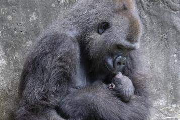 Les deux-tiers de la faune sauvage ont disparu en moins de 50 ans)