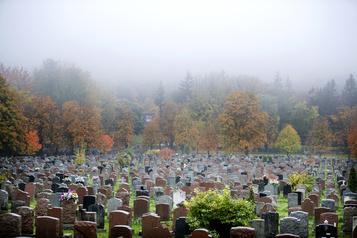 La vie dans les parcs Le mystère du cimetière)