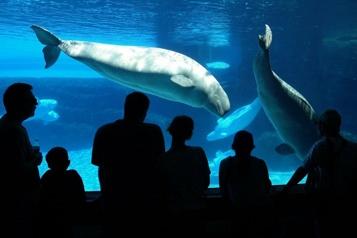 Marineland Les mammifères en détresse à cause de l'eau, selon un rapport)