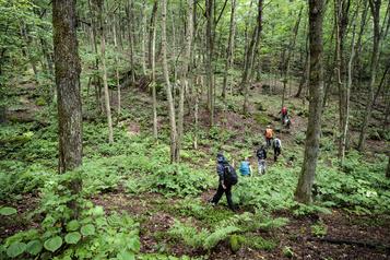 Laisser la place à d'autres vocations de la forêt)