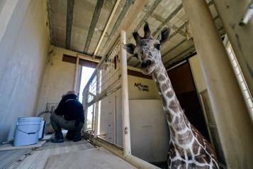 Mexique En pleine pandémie, baby-boom dans une réserve animale)