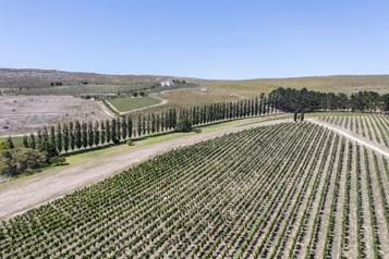 Afrique du Sud Vendanges au paradis pour des vins uniques en leur genre)