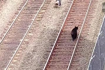 Un ours sur une voie ferrée près du centre-ville de Vancouver)