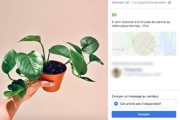 Le marché florissant desplantes «d'occasion»