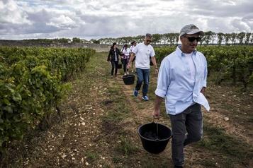 Malgré les critiques, la biodynamie séduit les vignerons