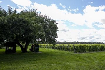 Vignoble et domaine Beauchemin Grands vins à Yamachiche)