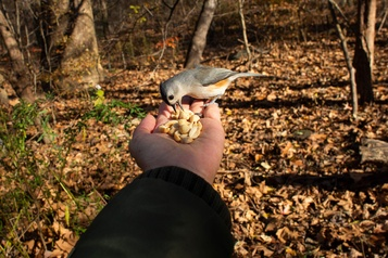 Central Park L'observation des oiseaux, rare loisir en temps de COVID-19)