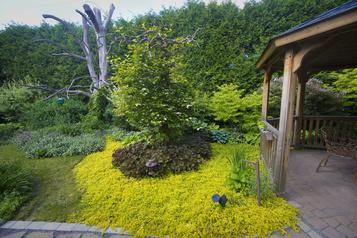 Côté jardin: un tapis végétal)