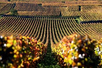 Plus de blanc ou de rouge en Bourgogne ?