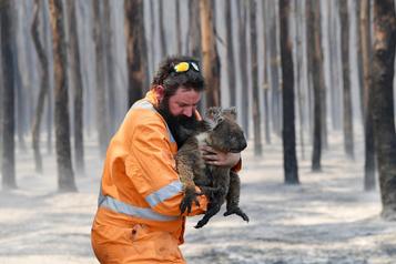 Incendies en Australie: vers l'une des plus grandes extinctions de l'histoire de l'humanité?