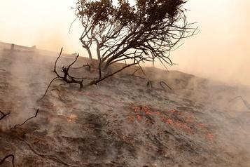 Californie Un violent feu de broussailles force l'évacuation de 60000personnes)