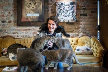 À la recherche du bonheur:les chats d'abord