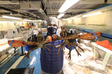 Les Américains s'arrachent le homard duQuébec)