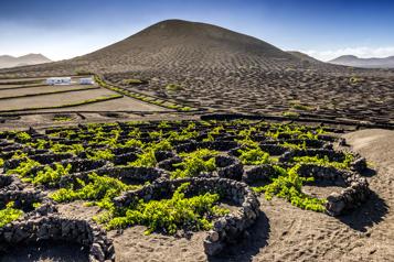 Comment reconnaître un vin de volcan?)