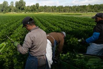 Des groupes réclament plus de droits pour les travailleurs étrangers)