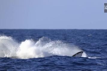 Jour de la Terre À la découverte des baleines )