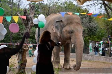 Pakistan Une fête d'adieux pour un éléphant maltraité transféré au Cambodge)