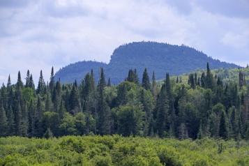 Réduction des émissions de gaz à effet de serre Des crédits forestiers québécois à la Boursedu carbone)