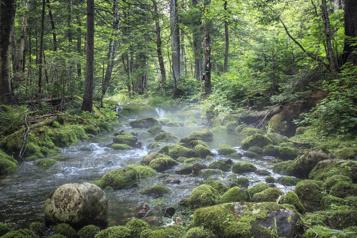 La nature, c'est bon pour vous)