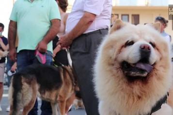 Journée mondiale des animaux Chypre : bénédiction des animaux de compagnie