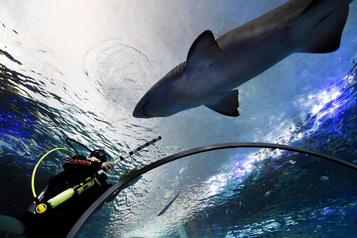 Nu avec les requins: il plaide coupable de méfait