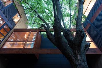 Sauver les arbres urbains, un à la fois