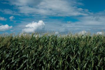 Forte demande Des agriculteurs canadiens pourraient revivre de beaux jours)