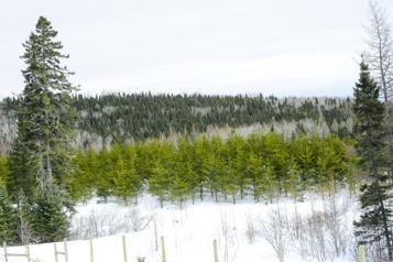Projet d'aire protégée au Saguenay Le ministère des Forêts accusé d'obstruction)