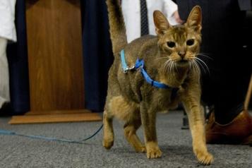 L'État de New York interdit le dégriffage des chats