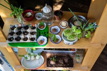 Jardinage à la maison: «Il ne faut pas avoir peur de ne pas réussir»)