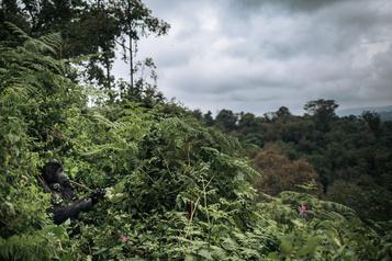 Un tiers de la flore tropicale africaine serait menacée d'extinction