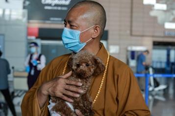À Shanghai, un moine rescape et soigne près de 8000chiens errants)