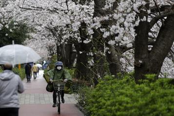 Malgré le virus, le Japon fête les cerisiers en fleurs