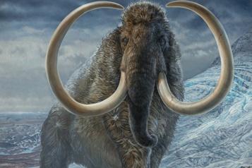États-Unis Une entreprise se donne pour mission de recréer des mammouths laineux)