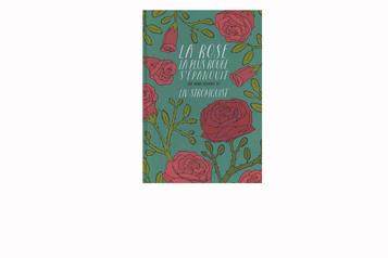 La rose la plus rouge s'épanouit: les affaires du cœur décortiquées ★★★★