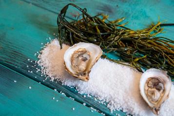 Oystermania: des huîtres, encore des huîtres