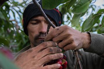 Cueilleurs de fruits Des conditions «inacceptables»)