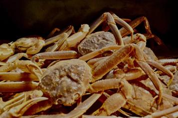 Les crabiers prendront la mer mercredi)