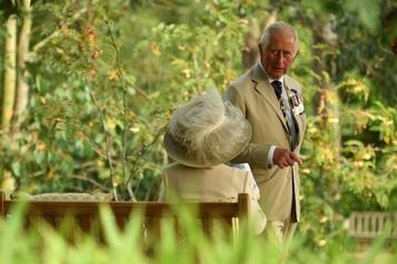 Prince Charles: la crise climatique va «éclipser» l'impact de la pandémie)