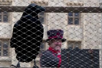 Disparition d'un des corbeaux légendaires de la Tour de Londres)