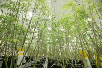 Troisième trimestre Aurora Cannabis creuse sa perte)