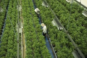 Canopy Growth affiche une perte au 2e trimestre