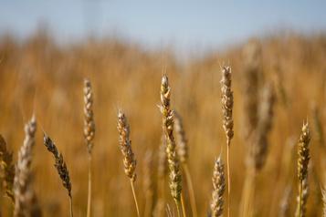 Agro-alimentaire  Un regroupement de coops secoue le marché des grains au Québec )