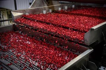 Acquisition de Decas Cranberry Products Une porte sur le marché américain pour Fruit d'or)