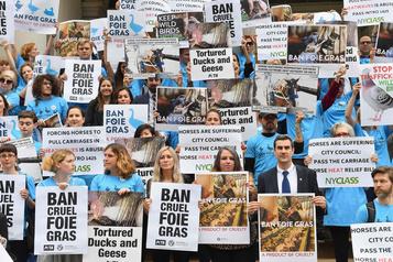 La vente de foie gras sera interdite à New York dès 2022