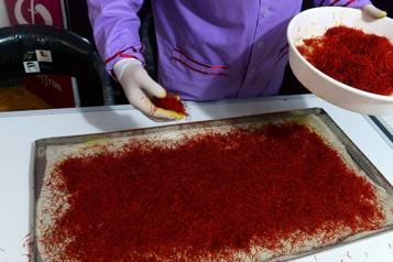 Afghanistan «L'or rouge» du safran glisse entre les mains des femmes)