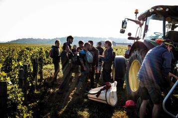 Rendements historiquement bas pour les vendanges en Bourgogne)